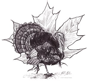 Turkey with leaf pen and ink illustration