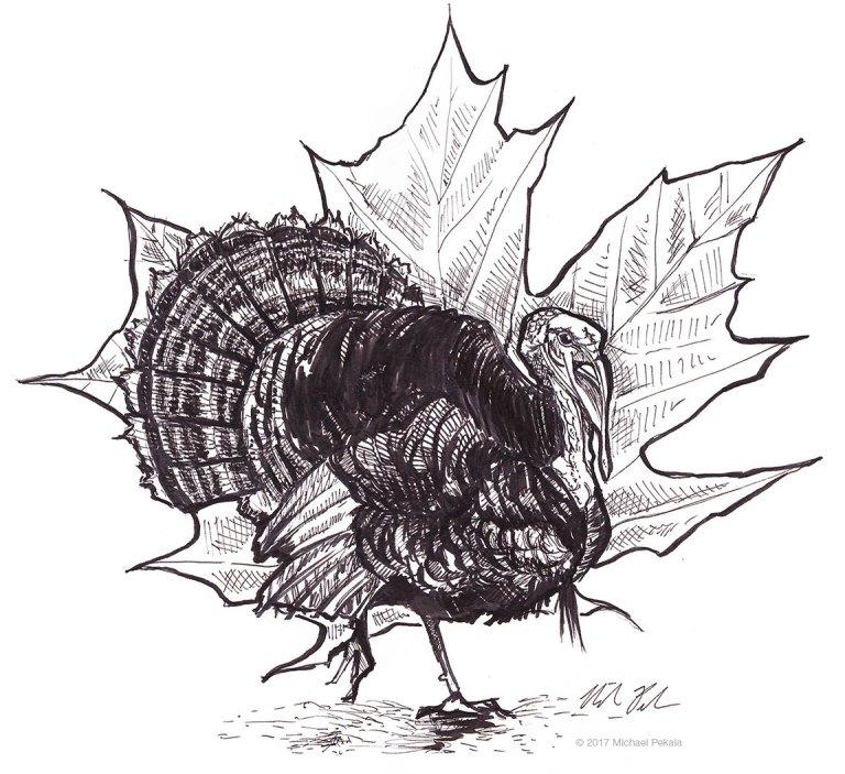 Turkey with leaf pen and ink illustration