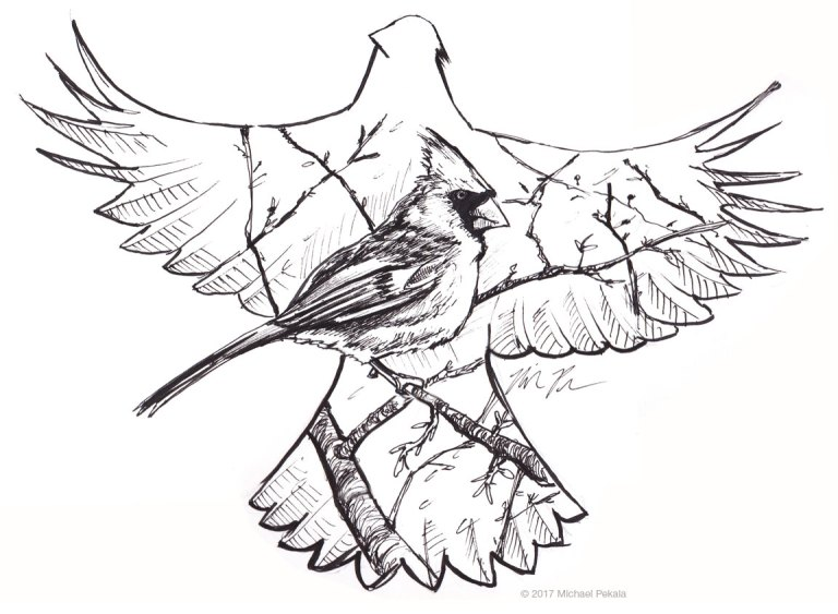 Cardinal in snow pen and ink illustration