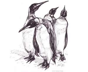 Penguins pen and ink illustration