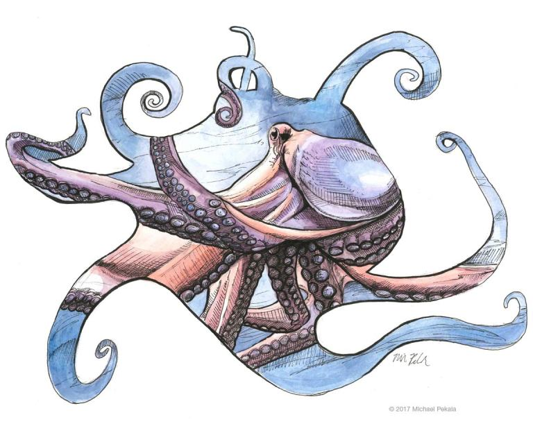 Octopus watercolor with pen and ink illustration