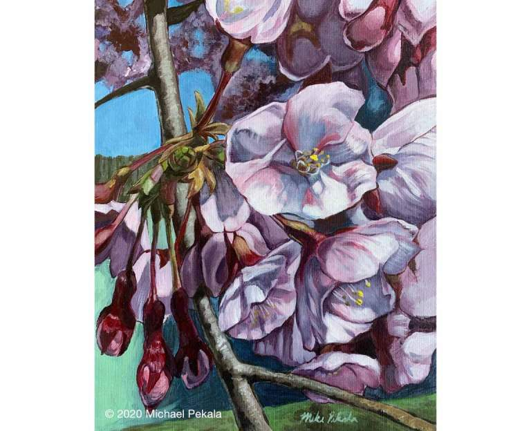 drawing_cherry_blossoms